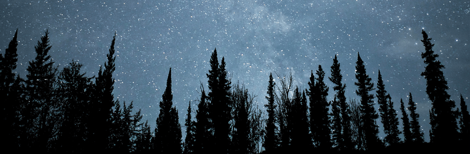 stars above trees